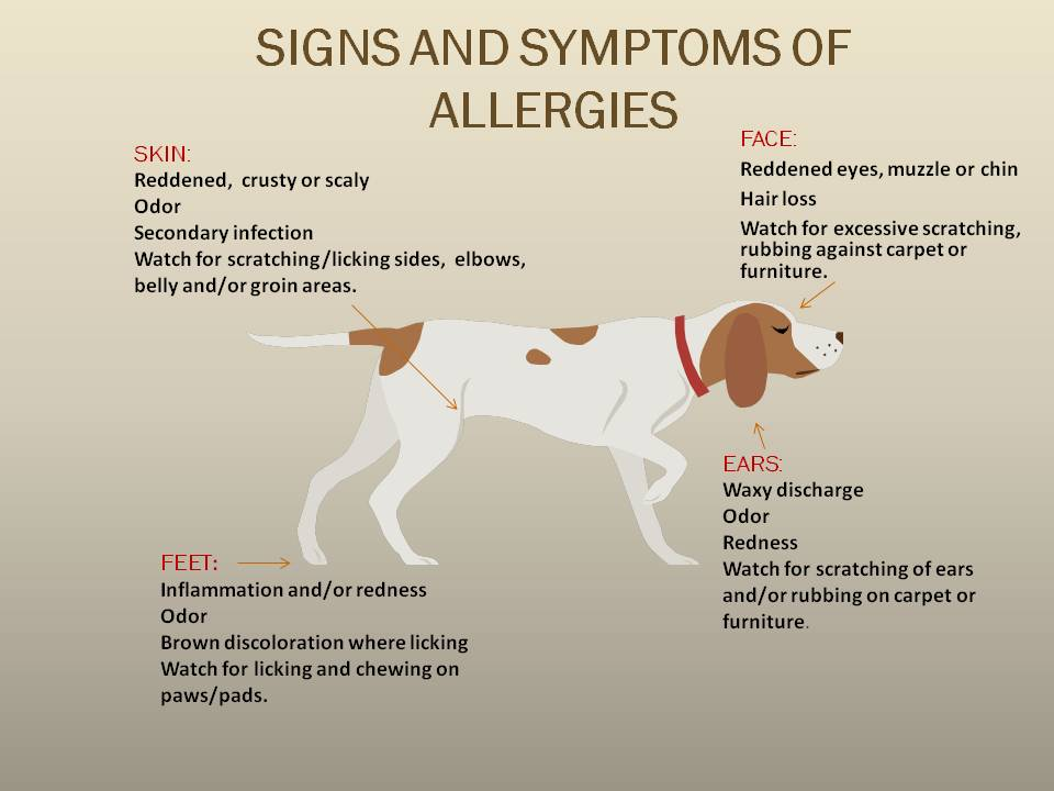 Can Dogs Get Allergies